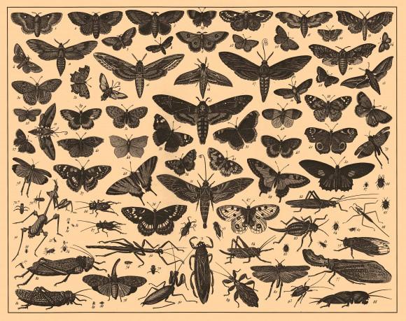 La ilustración científica es probablemente el ejemplo más claro de relaciones prácticas entre arte y ciencia